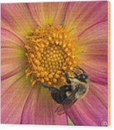 Bumble Bee Dahlia Wood Print