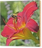 Bumble Bee In Day Lily 109 Wood Print