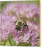 Bumble Bee On A Century Plant Wood Print