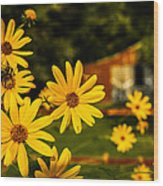 Bumble Bee On A Western Sunflower Wood Print