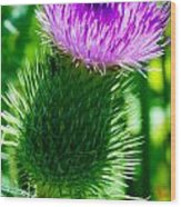 Bumble Bee On Bull Thistle Plant  Wood Print