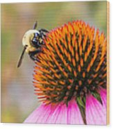 Bumble Bee on Coneflower Wood Print