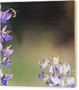 Bumble Bee On Lupine Wood Print