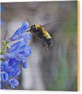 Bumble Blue - Casper Mountain - Casper Wyoming Wood Print