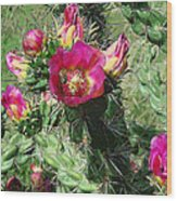 Bumble Cactus Flower Wood Print