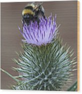 Bumble Thistle Wood Print