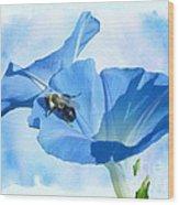 Bumblebee And Blue Morning Glory Wood Print