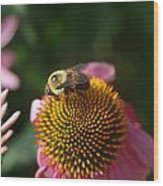 bumblebee and Echinacea Wood Print