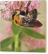 Bumblebee Clinging To Sedum Wood Print