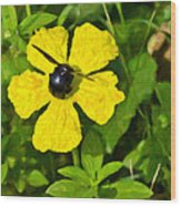 Bumblebee On Flower Wood Print