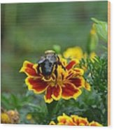 Bumblebee On Marigold Wood Print