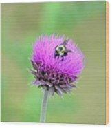 Bumblebee On Thistle 2013 Wood Print