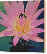 Bumblebee On Water Lily Wood Print