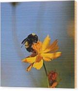 Bumblebee On Yellow Flower Wood Print