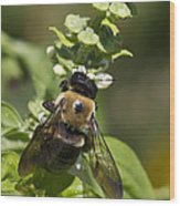 Bumblebees And Basil Wood Print