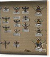 Bumblebees - Wild Bees - Wesps - Yellow Jackets - Ichneumon Flies - Apiformes Vespulas Hymenopteras  Wood Print