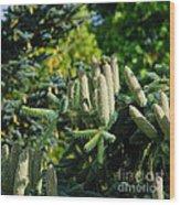 Bumper Cone Crop Wood Print