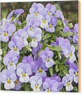 Bunch Of Pansy Flowers Wood Print