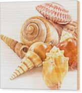 Bunch Of Shells Wood Print by Jean Noren