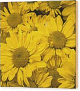 Bunch Of Yellow Daisies Wood Print