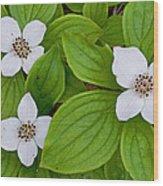 Bunchberries Wood Print