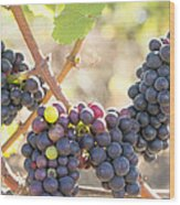 Bunches Of Red Wine Grapes Hanging On Grapevine Wood Print