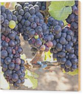 Bunches Of Red Wine Grapes Wood Print