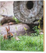 Bunny In The Grass Wood Print