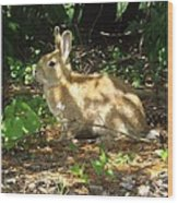 Bunny In The Wild 2 Wood Print