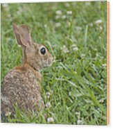 Bunny Rabbit In The Clover Wood Print