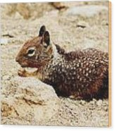 Bunny Squirrel Wood Print