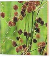 Bur-reed Wood Print