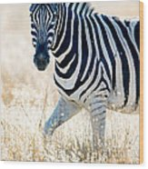 Burchells Zebra Equus Quagga Wood Print