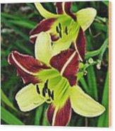 Burgundy And Yellow Lilies 2 Wood Print