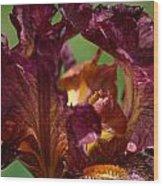 Burgundy Blossom Wood Print