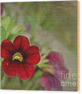 Burgundy Calibrochoa Blank Greeting Card Wood Print