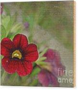 Burgundy Calibrochoa Blank Greeting Card II Wood Print