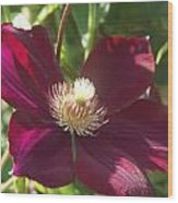 Burgundy Clematis Profile   # Wood Print