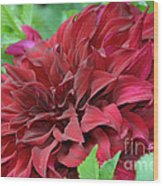 Burgundy Dahlia Wood Print