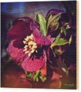 Burgundy Hellebore Flower Wood Print