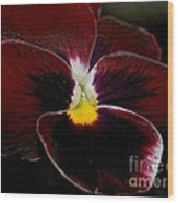 Burgundy Pansy  Wood Print