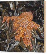 Buried In Kelp Wood Print by Sarah Crites