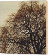 Burlington Willow Wood Print