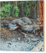 Burly Wood Print by Donna Blackhall