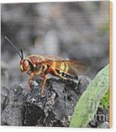 Burn Pile Bee Wood Print