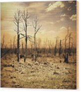 Burned Out Forest Wood Print