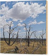 Burned Trees On Colorado Plateau Wood Print