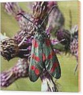 Burnett Moth Wood Print