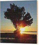Burning Bush Wood Print