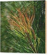 Burnished Pine Wood Print